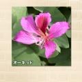 キャシーマム プアナニキルト バスタオル2枚セット/ブラウン&ピンク