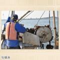 漁師直伝の味 潮ゆで牡蠣7袋セット