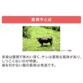 宮崎牛ロースステーキ 180g×2 計360g